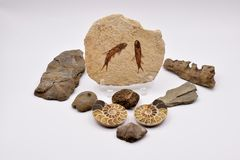 Fossili e gemme su fondo bianco Immagine Stock