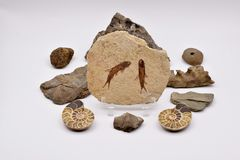 Fossili e gemme su fondo bianco Fotografie Stock Libere da Diritti