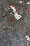 Fossili su roccia Immagini Stock Libere da Diritti