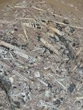 fossilien lizenzfreie stockfotografie