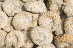 Fossilien lizenzfreies stockfoto