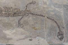 fossilien stockbild