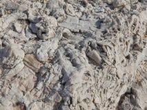 Fossilien auf der Mittelmeerküste Stockfotografie