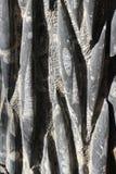 Fossilien auf Felsen lizenzfreies stockbild