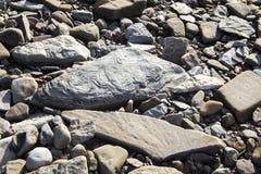 Fossilien auf Felsen an versteinerten Klippen Joggins, Nova Scotia, Kanada lizenzfreies stockbild