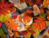 Fossilien, Blätter u. Federn Stockbild