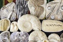 Fossilien in einem alten Markt lizenzfreie stockbilder