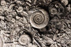 Fossilien im Felsen lizenzfreies stockfoto