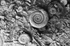 Fossilien im Felsen stockfotografie