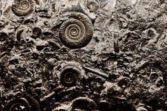 Fossilien im Felsen lizenzfreies stockbild