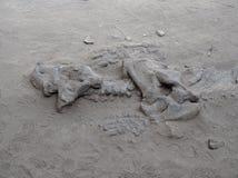 Fossilien an provinziellem Park Ischigualasto stockfotografie