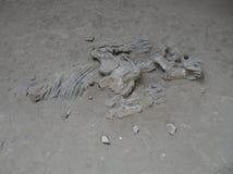 Fossilien an provinziellem Park Ischigualasto lizenzfreie stockfotos