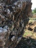 Fossilien und Steine stockfotos