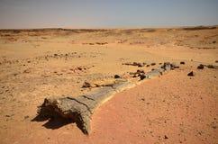 Fossilised drzewo w afrykanin pustyni Fotografia Royalty Free