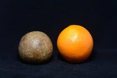 Fossilised orange Stock Images
