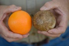Fossilised orange Royalty Free Stock Photo