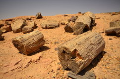 Fossilised tree in african desert Stock Photos