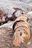 Fossiliserad journal som är bruten i avsnitt, förstenad skog, Arizona Royaltyfria Foton