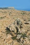 Fossiliserat korallfält Arkivfoto