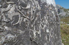 Fossilizações em uma rocha, cumes de Lechtal, Áustria Imagem de Stock