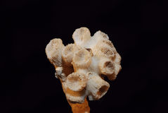 Fossilized coral Stock Photography