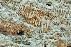 Fossilized coral deposits after the tide in the Red Sea Royalty Free Stock Photo