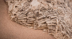 Fossilized coral reef Royalty Free Stock Image