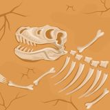 Fossilized dinosaur skeleton buried in the ground. Tyrannosaurus Rex. Archaeological excavation. Paleontology concept. Fossilized bones and skull of dinosaur Royalty Free Stock Image