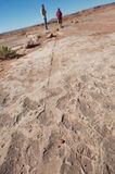 Fossilized dinosaur tail track, AZ, US Stock Photo