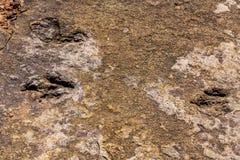Free Fossilized Dinosaur Tracks At Torotoro, Bolivia. Royalty Free Stock Photography - 165559457