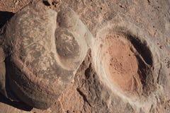 fossilized dinosaurdynga Arkivbild