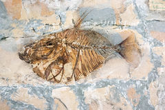 Fossilized fish Stock Photo