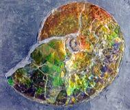 Fossilized iryzacja Fotografia Royalty Free