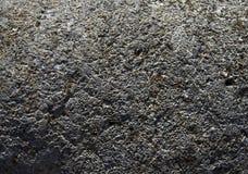Fossilized korali depozyty. zdjęcia royalty free