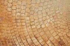 Fossilized odcisk prehistoryczny zwierzę obrazy stock