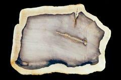 Fossilized petrified wood slab polished surface. Polished surface of slab of fossilized petrified wood beautiful geology nature background pattern Royalty Free Stock Images