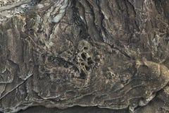 Fossilized rocks at Joggins Fossil Cliffs, Nova Scotia, Canada stock image