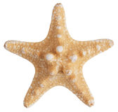 Fossilized sea star. On a white background royalty free stock image