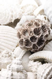 Fossilized seashell background Stock Photo