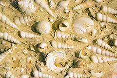 Fossilized shells on stone Stock Images