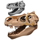 Fossilized skull of ancient animal. Vector Royalty Free Stock Images