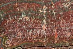 Fossilized Stromatolites Stock Photography