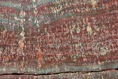 Fossilized Stromatolites Royalty Free Stock Photo