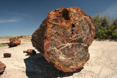 Fossilized Tree - Petrified Forest National Park royalty free stock photos