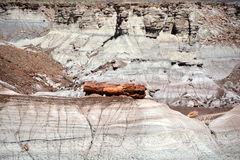 Fossilized Tree Trunks from the Triassic Period. In Petrified Forest National Park Stock Photos