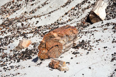 Fossilized Tree Trunks from the Triassic Period. In Petrified Forest National Park Stock Photography