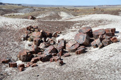Fossilized Tree Trunks from the Triassic Period. In Petrified Forest National Park Royalty Free Stock Photos