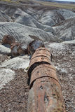 Fossilized Tree Trunks from the Triassic Period Royalty Free Stock Image