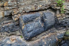 Fossilized trunks. In the Petrified Forest of Puyango in southern Ecuador stock photos