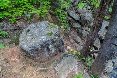 Fossilized trunks. In the Petrified Forest of Puyango in southern Ecuador stock photography